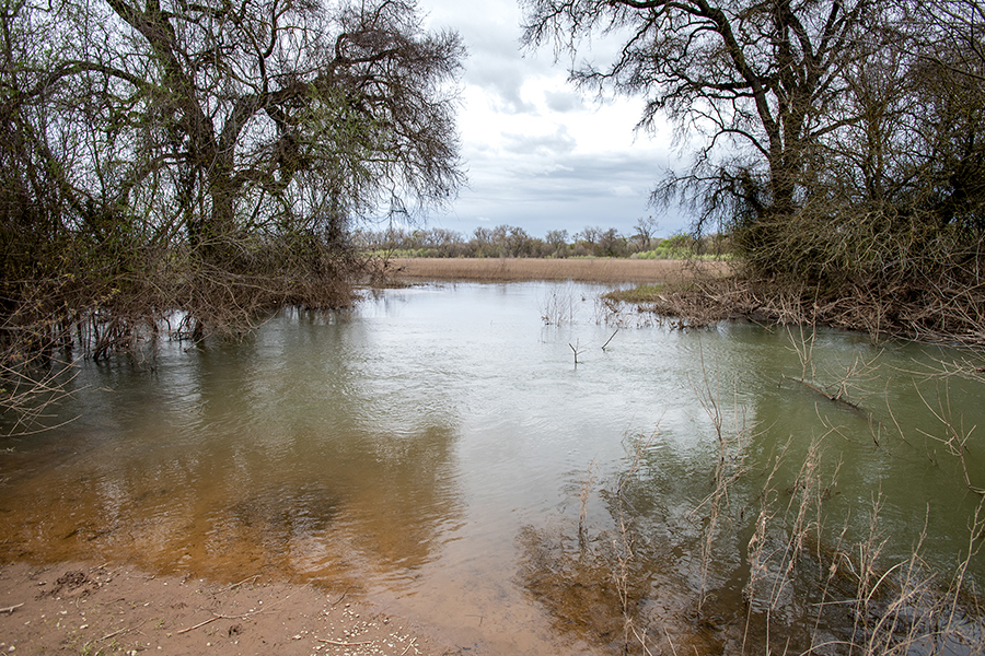 The Oneto-Denier Floodplain Restoration Project in the Cosumnes River Watershed near Galt.